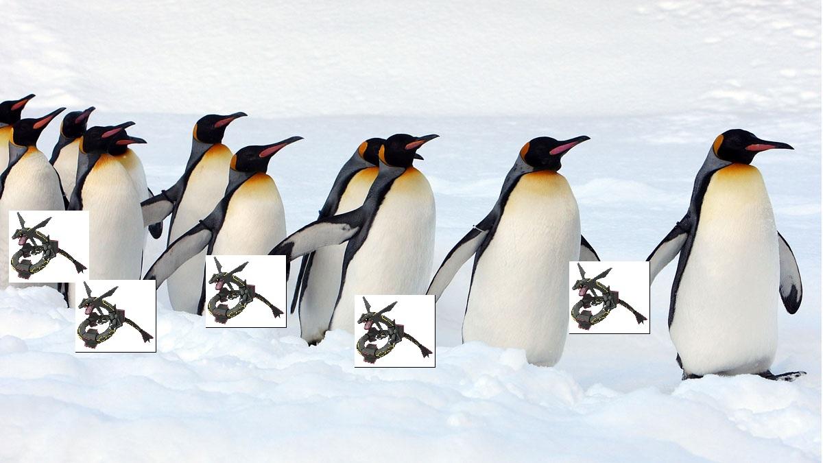160225-penguins.jpg