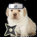 ninjadog.png