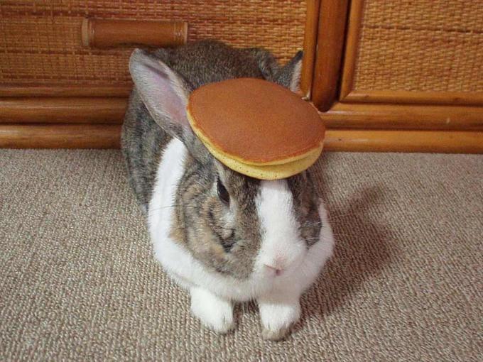 pancake_bunny (2).jpg