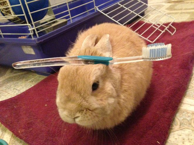 These 19 Bunnies With Things On Their Head Will Heal You Instantaneously.jpeg